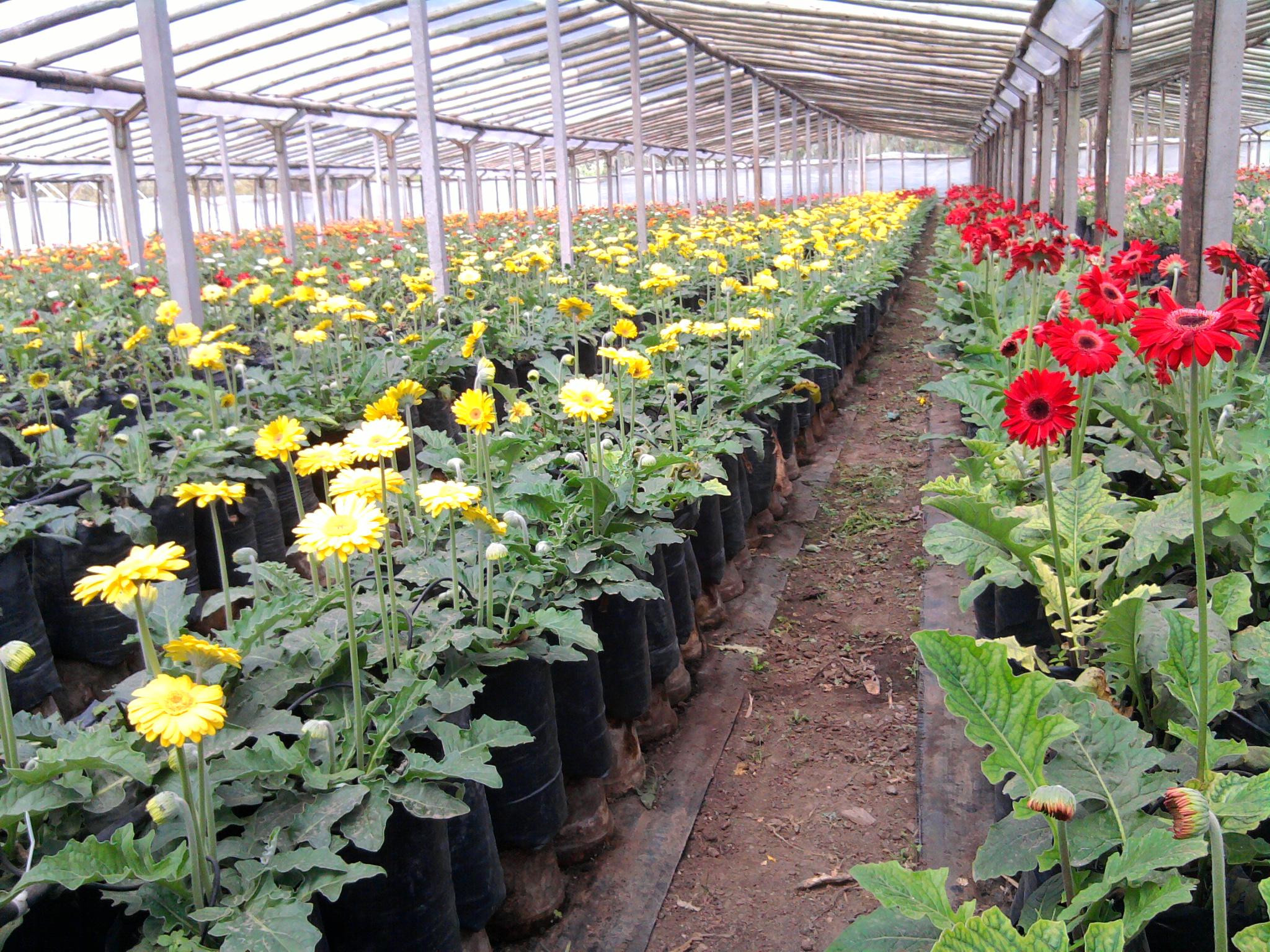 Flores musacco en vivero flores musacco for Funcion de un vivero escolar