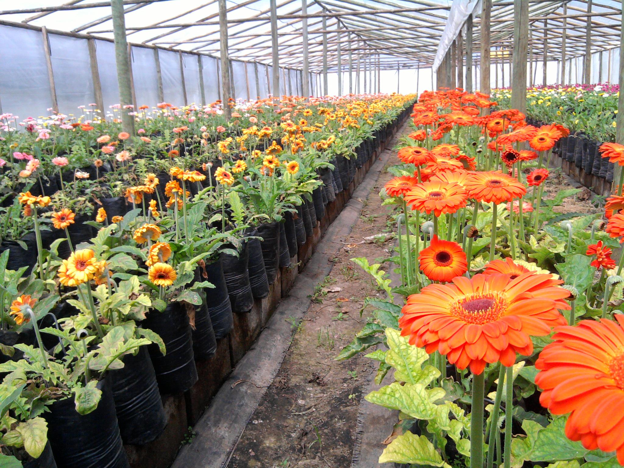 Vivero flores musacco flores musacco for Plantas que hay en un vivero