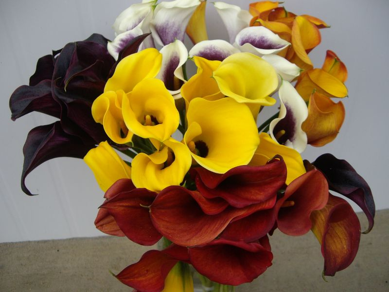 Mini Calas - Flores Importadas