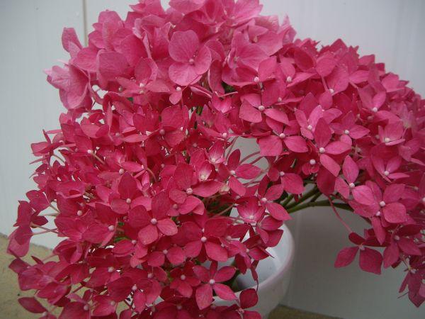 Flores Importadas por Flores Musacco
