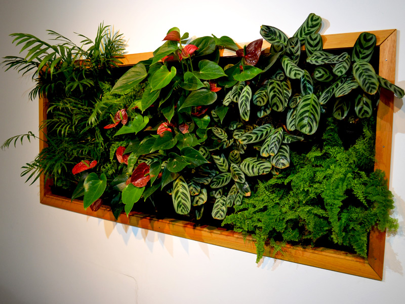 Jard n vertical flores musacco for Plantas recomendadas para jardin vertical